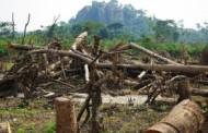 Agriculture sans déforestation?